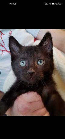 7 tygodniowe Kociaki szukają domów