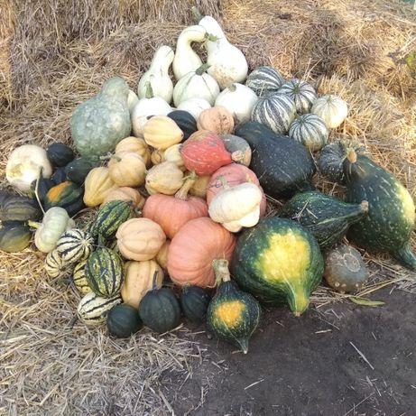 Акорновая (Acorn) тыква, которая может заменить картошку как и батат