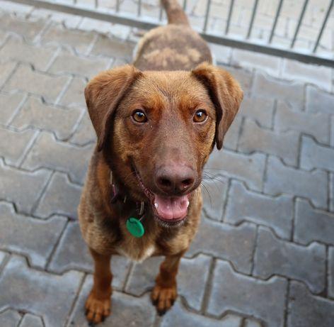 Bulgon 3 letni psiak czeka w schronisku!