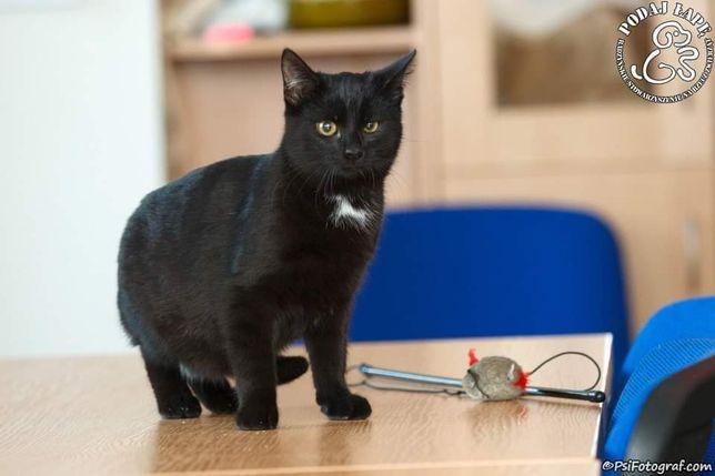 Salem do adopcji