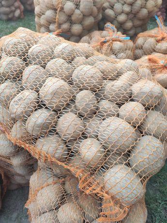 Ziemniak jadalny - Vineta, Ricarda, Satina i Katania