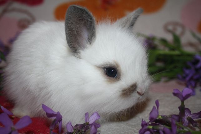 Крольчата редких окрасов ждут вас