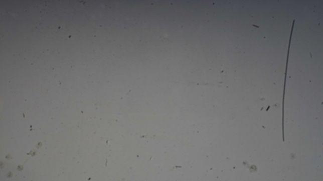 Чистка матриць фотоапаратів м. Долина