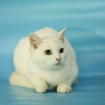Котенок Зевирка ищет своего человека котенок котята кошеня кот кошка