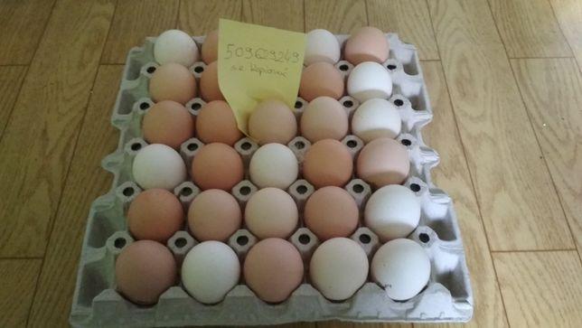 Jajka wiejskie ! Ekologiczne ! Dowóz, z gospodarstwa