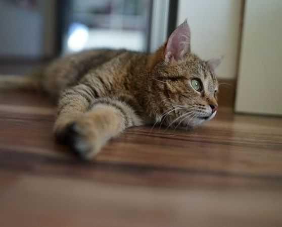 Młoda kotka Nurka czeka na nową rodzinę