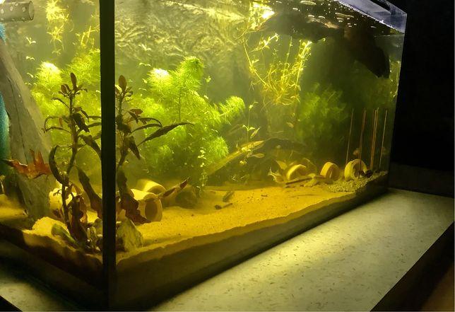 Piękne Gotowe! z życiem! Akwarium Aquael 128l LED pokrywa FULL wypas !