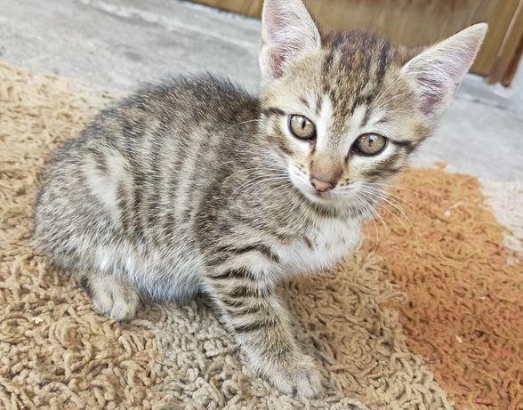 Oddam kotki koty