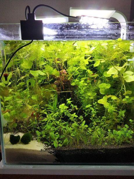 Rośliny do akwarium (Duża paczka)!