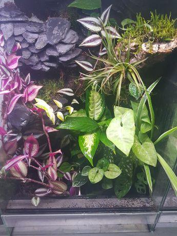 Terrarium tropikalne dla gekonów i felsum z wodospadem