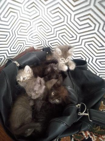 5 красивых кошек отдадим в хорошие руки
