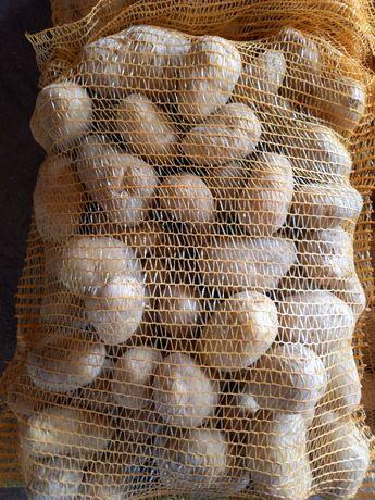 Ziemniaki przemysłowe Innovator