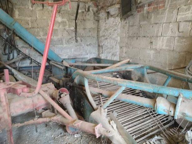 Kopaczka elewatorowa z ladą do warzyw buraków pastewnych burak