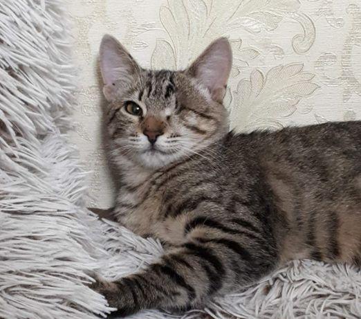 Непоседливый котенок-торпеда Джози, с одним глазиком, 5 мес, кошечка