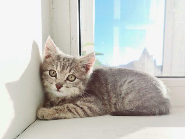 Подарю красивого котёнка