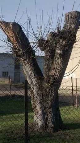 Usługi na przycinanie drzew na wysokości, wycinka drzew i krzewów.