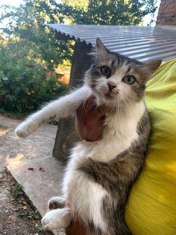 Отдам кошку в добрые руки!