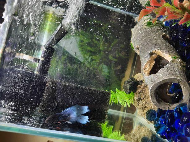Sprzedam akwarium z rybką i akcesoriami