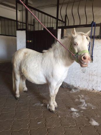 Продам пони , лошадь , конь , кобыла