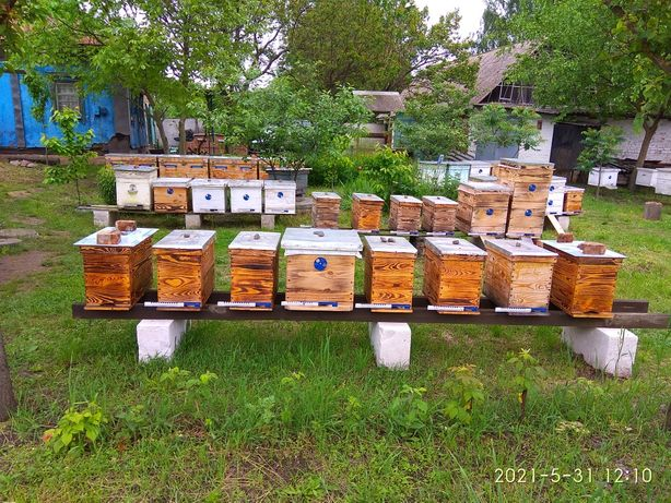 Продам пчел - рої, відводки (по 4-8 рамок).