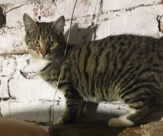 Кошечка Банни ищет дом и семью! Лисичанск, Северодонецк