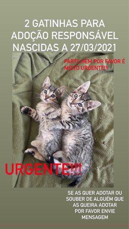 2 Gatinhas para Adoção Responsável Urgente!!!