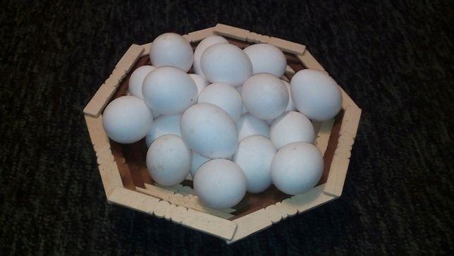 Инкубационное яйцо кур Белый ЛЕГГОРН. Яйца на инкубацию.Порода!