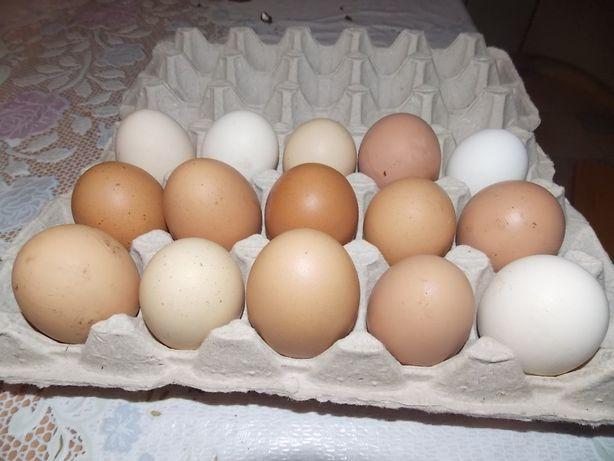 Продается инкубационное яйцо.
