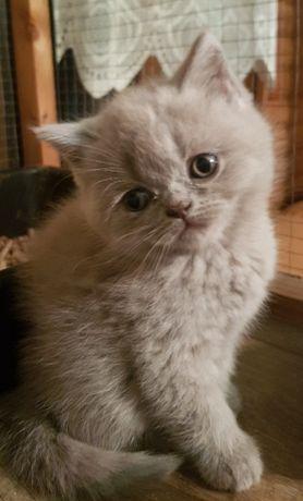 Котята готовы к переезду к новым любящим хозяевам