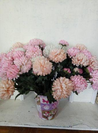 Хризантемы цветы декоративные