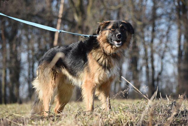 Filipek - młodzik idealny dla rodziny z dziećmi i psami