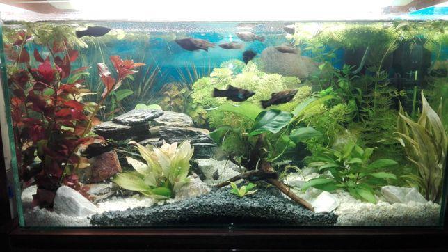 Rośliny akwariowe z przycinki