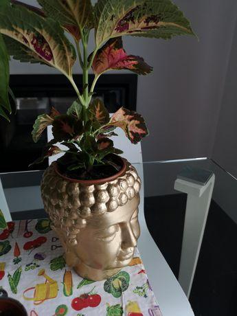 Vaso cabeça Buddha 18,5cm