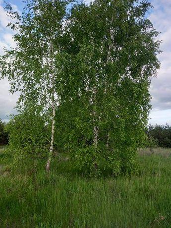Ділянка з лісом, участок, земельна ділянка