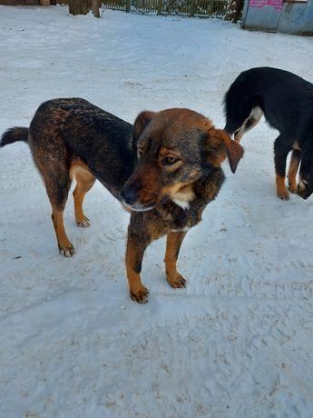 Шукаємо дім для молодої собачки
