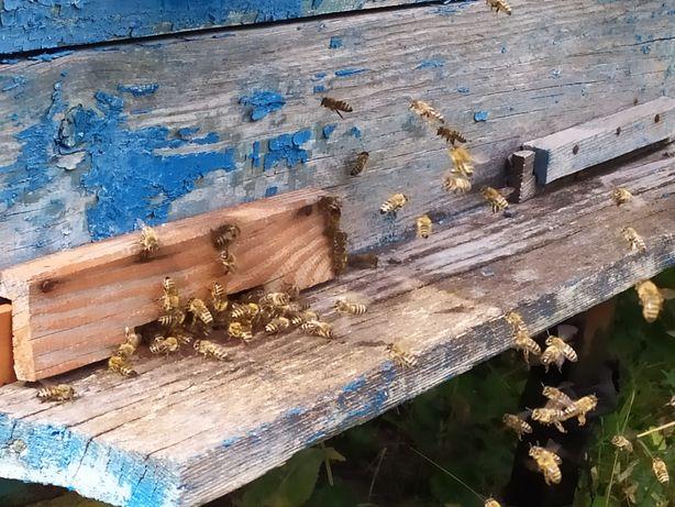 Обміняю мед