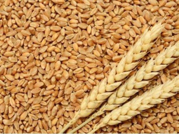 Продам пшеницю та ячмінь