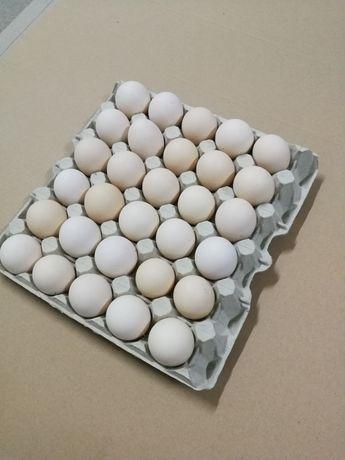 Jajka jaja wiejskie od kur z wolnego wybiegu