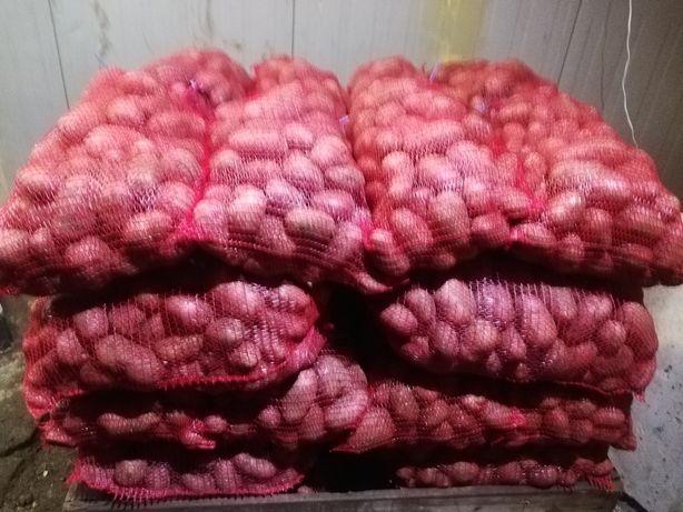 Sprzedam ziemniaki jadalne odmiany Ricarda Irga Sifra