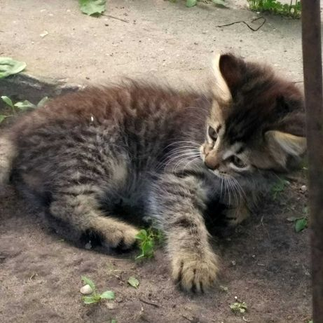 Котята ищут семью!!!