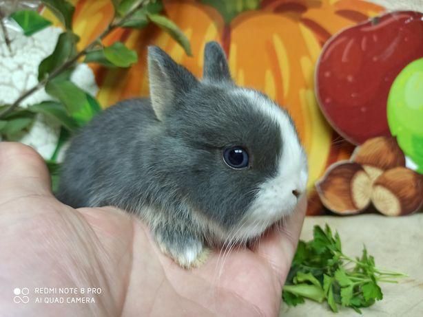 """Карликовые кролики из питомника """"Bamby"""""""