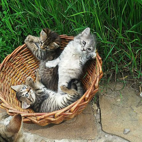 Котята. Ищем дом с видом на море и рыбу).