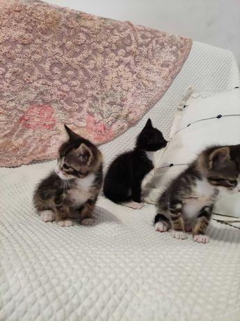 Gatos para adoção responsavel
