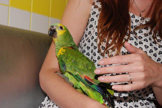 Попугай Амазон синелобый - маленькие птенчики