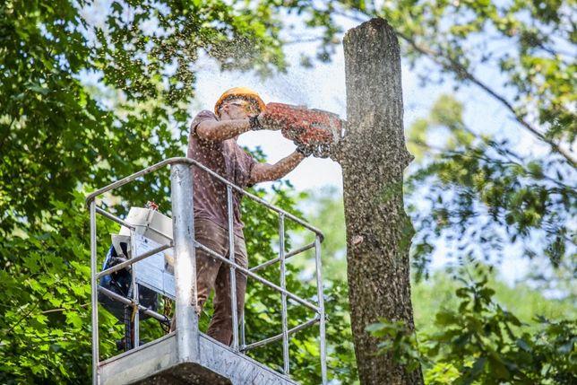 Wycinka drzew , wycinka drzewa, sprzątanie, rębak do gałęzi,