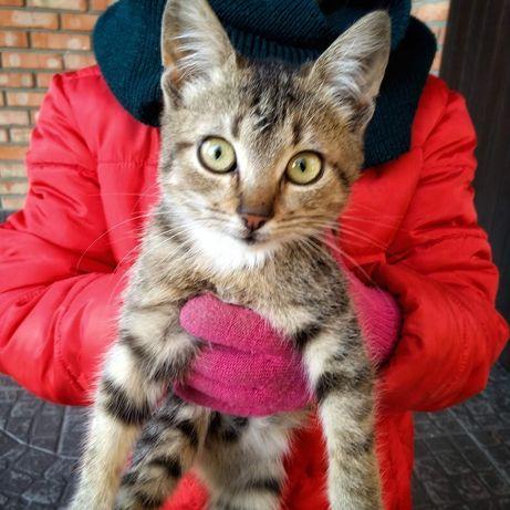Ласковые полосатики котята 5 месяцев
