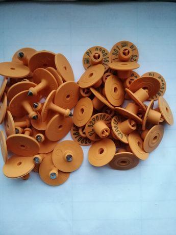 Urzędowe kolczyki dla trzody chlewnej