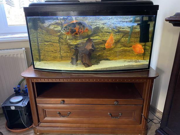Akwarium 240L wszystkie ryby+akwarium+pokrywa+filtry+szafka