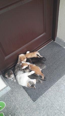 Piękne kotki oddam w dobre, odpowiedzialne ręce i kochające serca.
