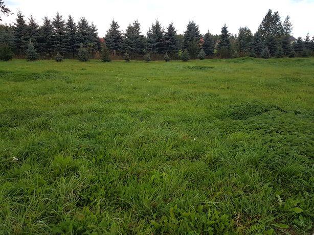 działka 2 hektary do wynajęcia